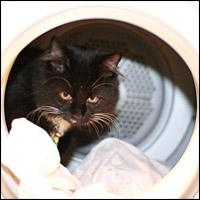 A cat in a washing machine