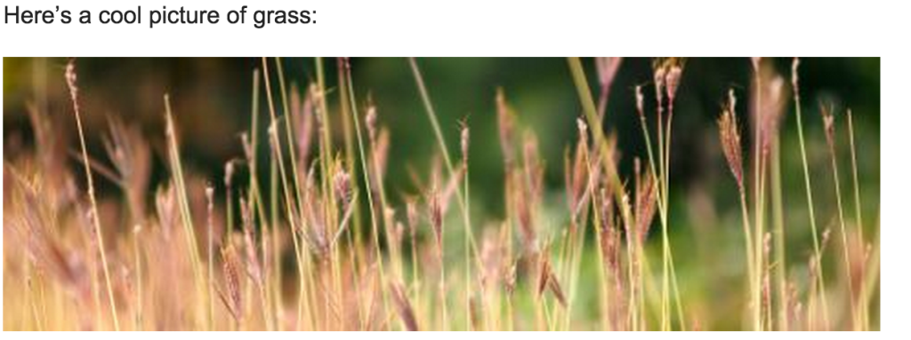 an image of grass