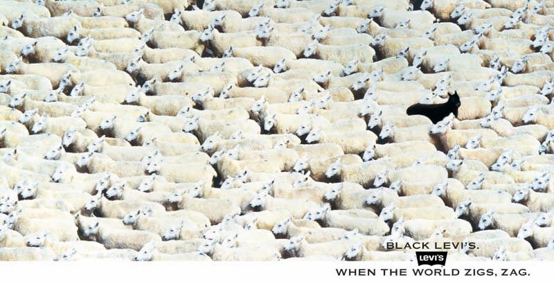 Levi Sheep ad