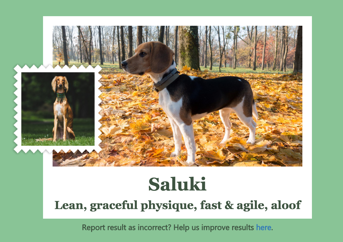 The app identifies a beagle as a Saluki
