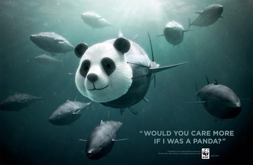 Cute Panda tuna