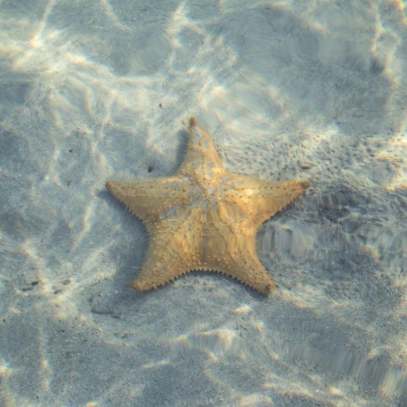 Starfish photographed underwater