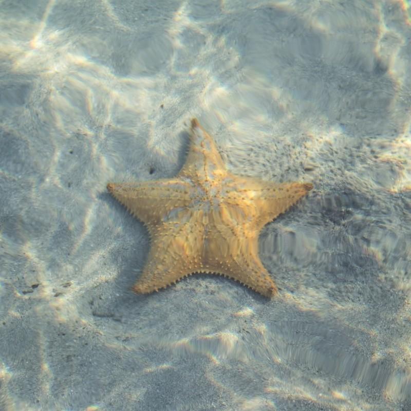 Starfish photographed underwater