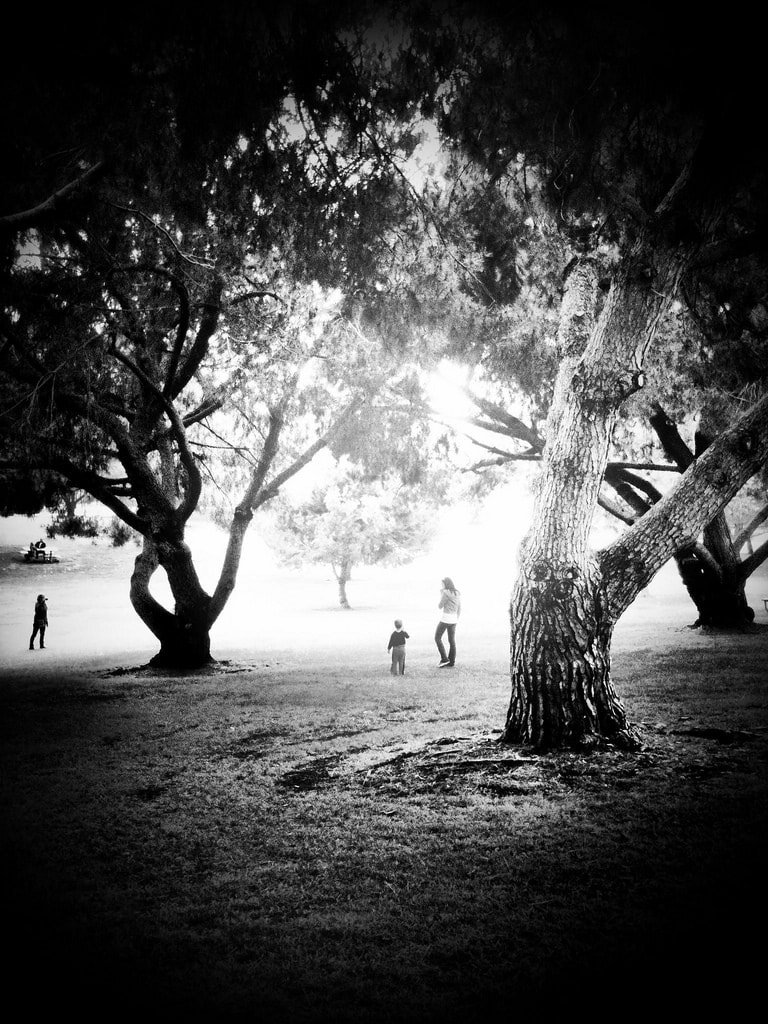 High contrast black and white park view