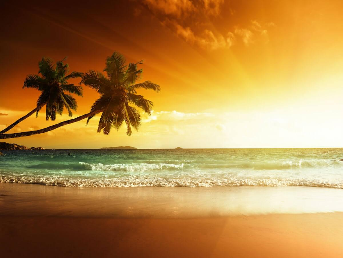 (Looking out at the ocean. Sun sets in top right. Palm trees reach in from the left edge.)