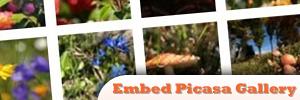 jQuery-Embed-Picasa-Gallery.jpg