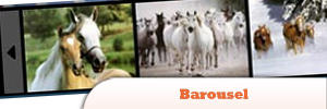 Barousel.jpg