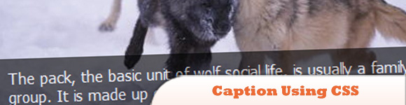 Making-Image-Overlay-Caption-Using-CSS.jpg