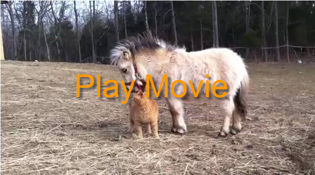 piper-horse
